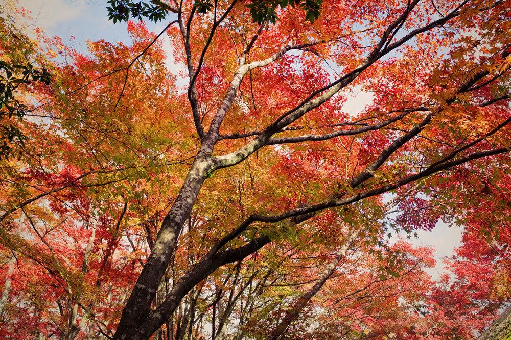 TALMARKES | Japan 033.JPG