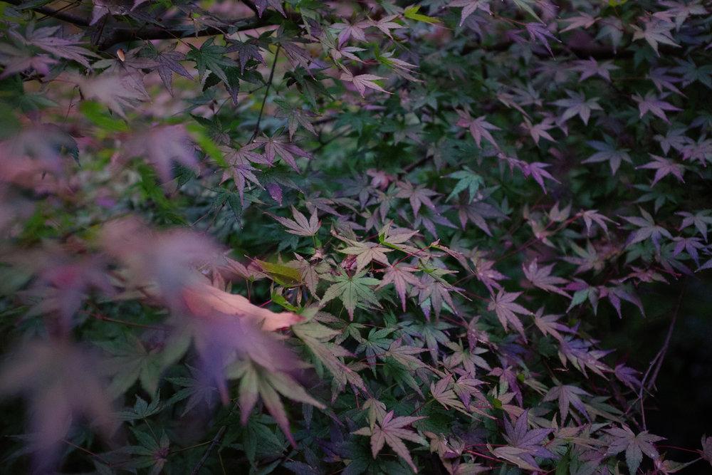 TALMARKES | Japan 047.JPG