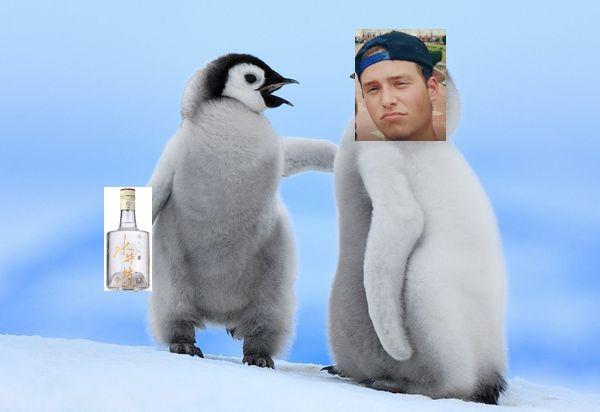 Baby-Penguins.jpg