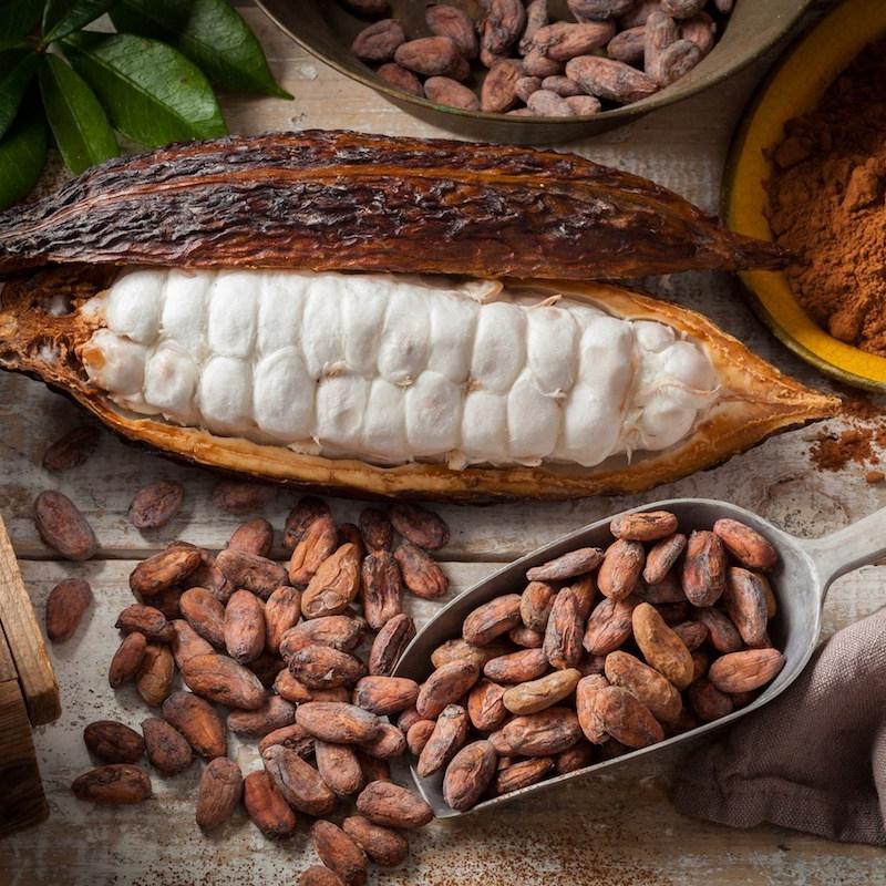 cacao-bean.jpg