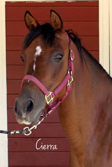 pony.express.santa.rosa.sweetie