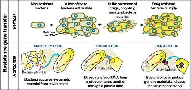 Figure 1.  Mechanisms of resistance gene transfer in bacteria.