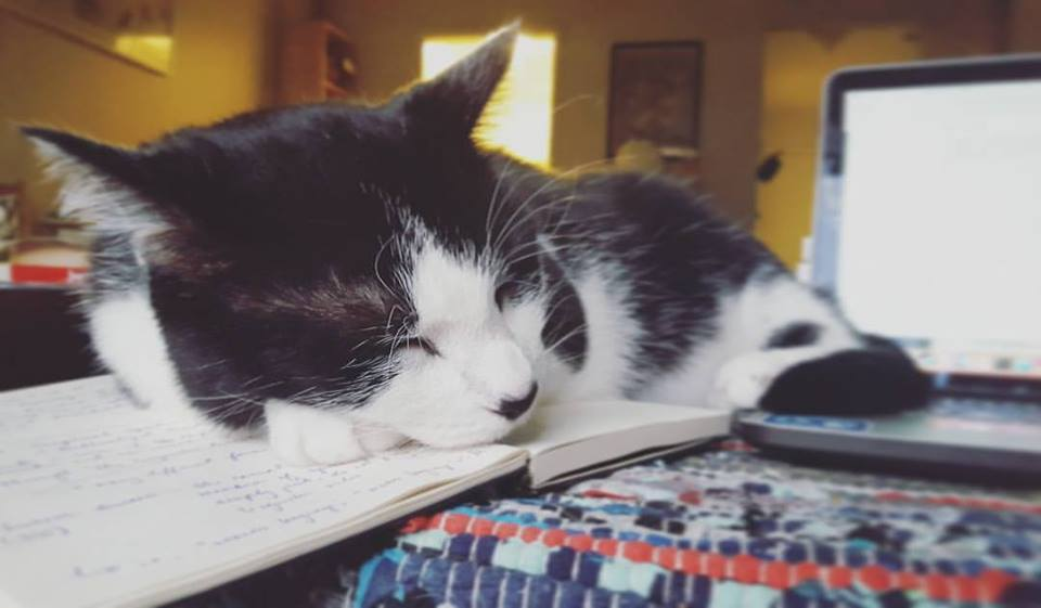 This sleepy cat is Toshi, who prefers naps over working. Photo by Hannah Dahlberg-Dodd