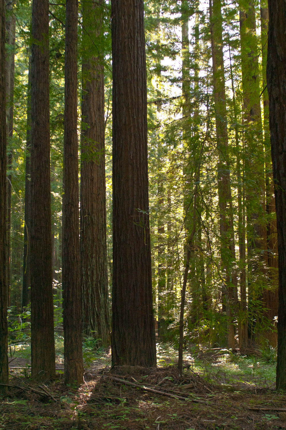 Navarro_River_Redwoods.jpeg