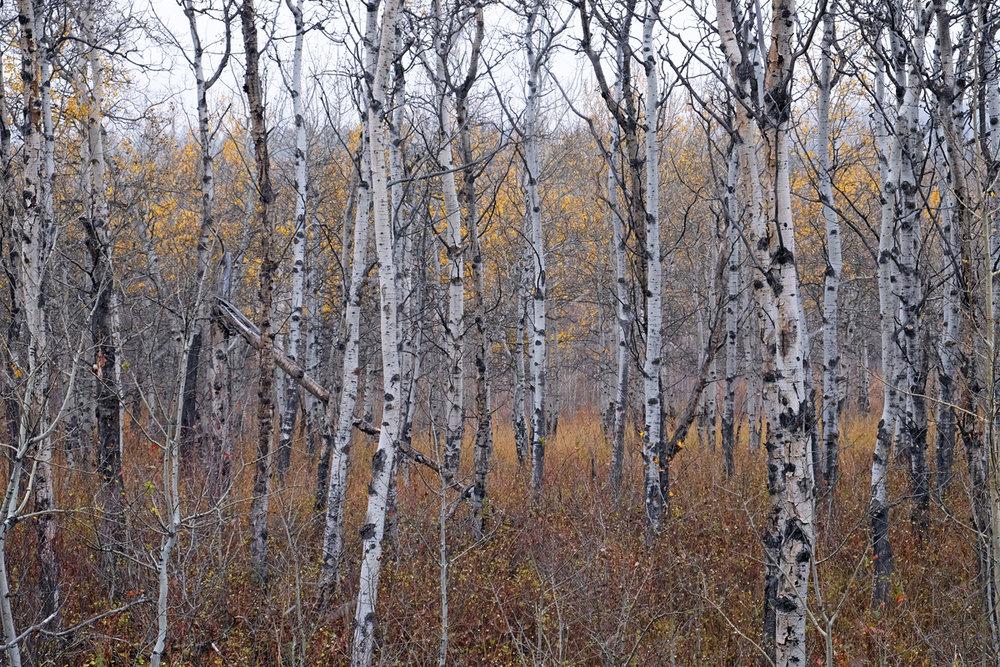 montana-gnp-DSCF5358-sm.jpg