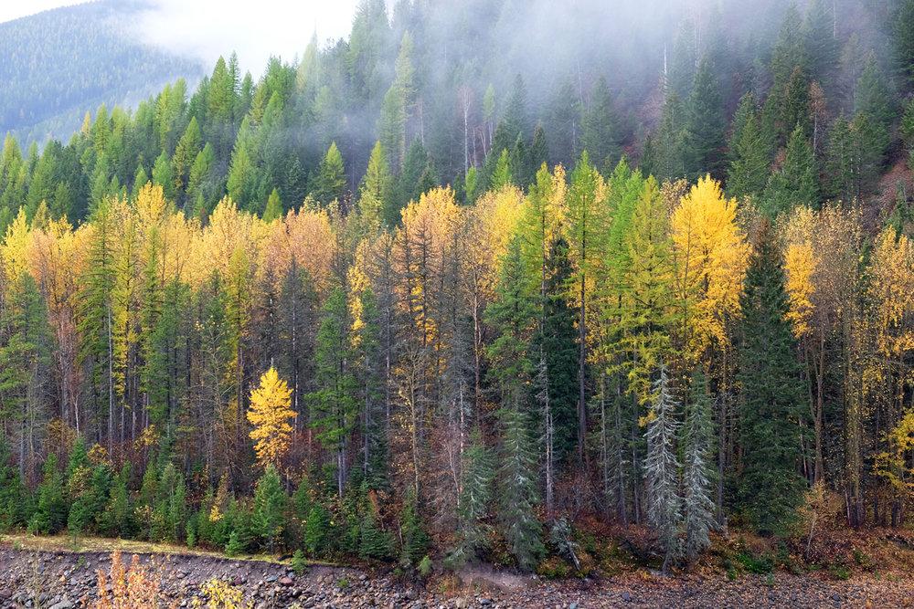 montana-gnp-DSCF5613-sm.jpg