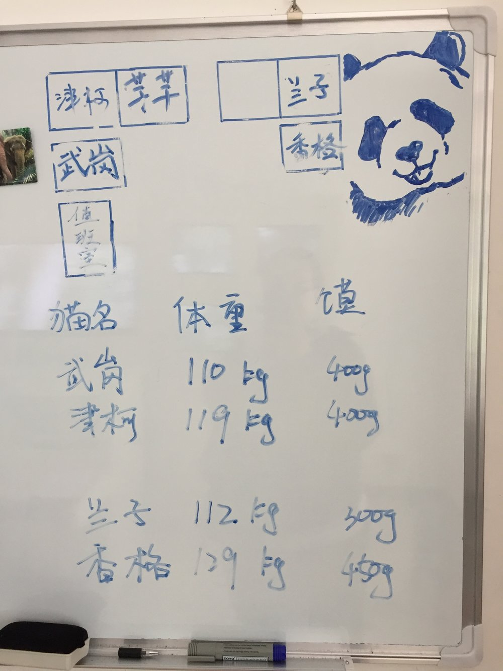 The drawing at the top reminds me of my sister and I drawing bears on my grandma and pap paps chalkboard.  These are the pandas weights.