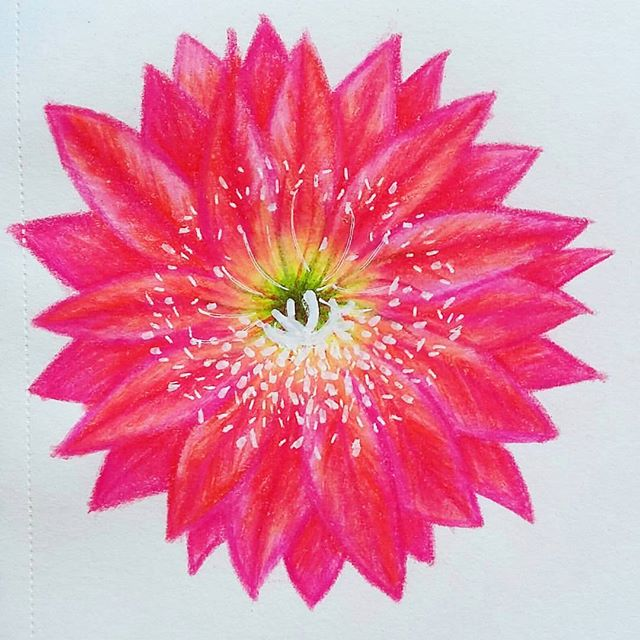Just felt like sharing this flower again today. #marianaoppel #flower #illustration