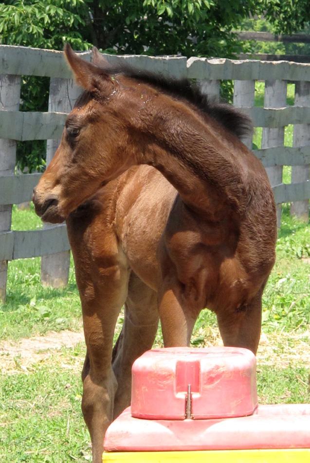 foal-2.jpg