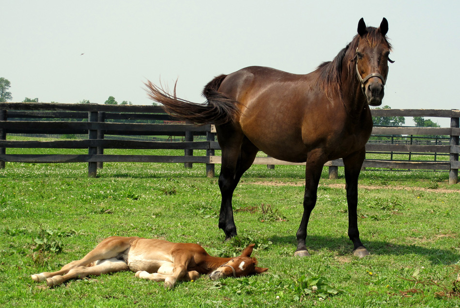 horse-and-foal-1.jpg