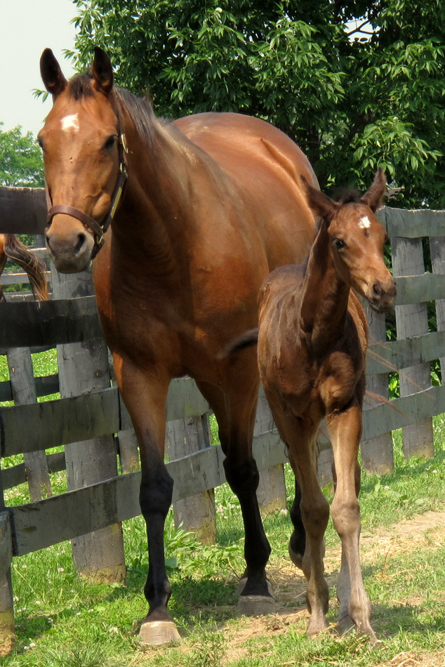 horse-and-foal-4.jpg