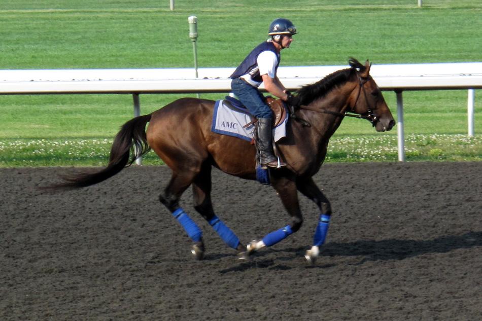 horse-running-2.jpg