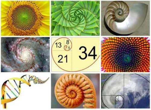 Fibonacci's spirals in nature from strands of DNA helix to cyclones and even                                                              the ever-expanding galaxy!