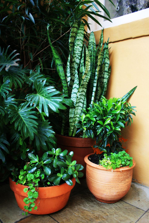 Chantelle-Leenstra-Chippendale-Garden-Pots.jpg