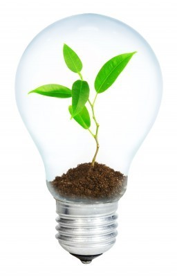 Innovatio_lightbulb plant - Copy.jpg