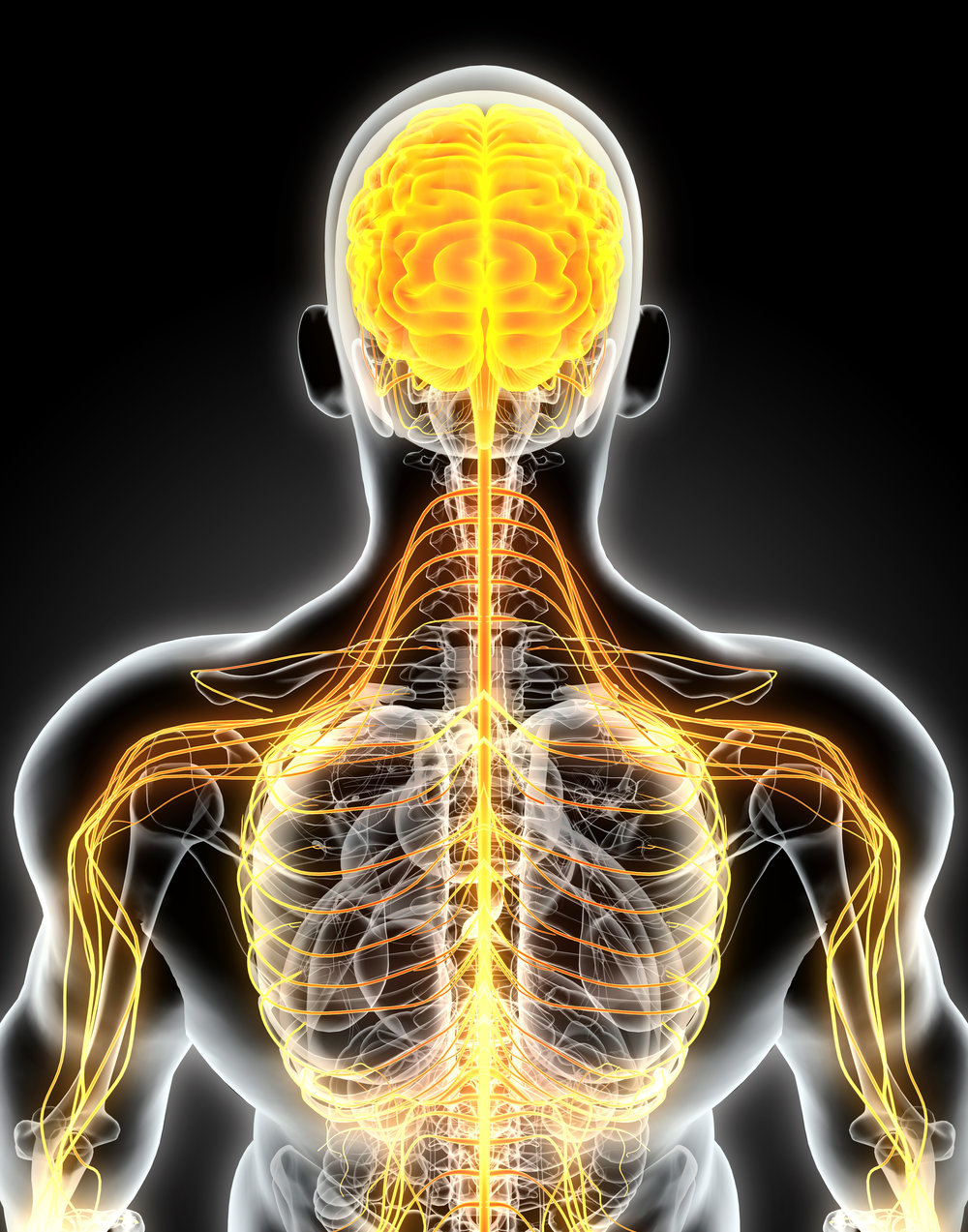 The neurological response to chiropractic services in Mackay