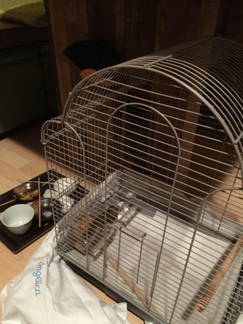 rio-in-cage.jpg