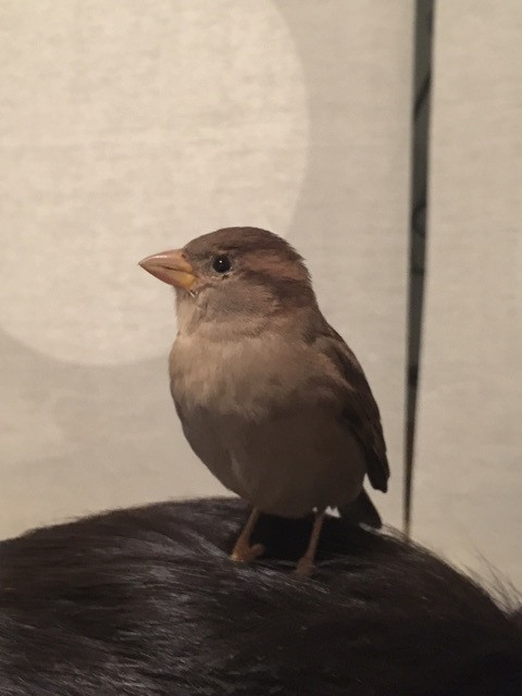 rio-wild-sparrow.jpg