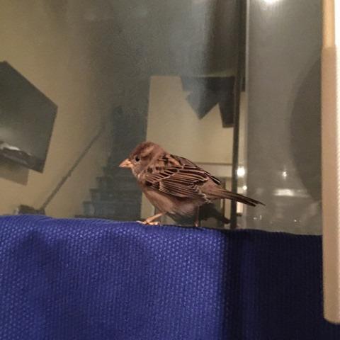 sparrow-poop.jpg