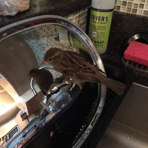 sparrow-kitchen.jpg