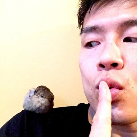 sparrow-sleeping-on-shoulder.jpg