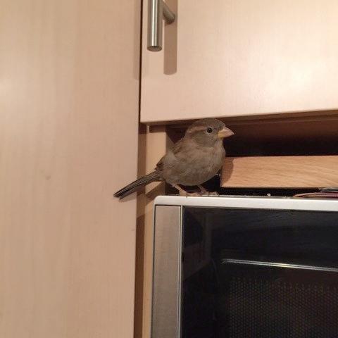 bird-faverit-corner.jpg