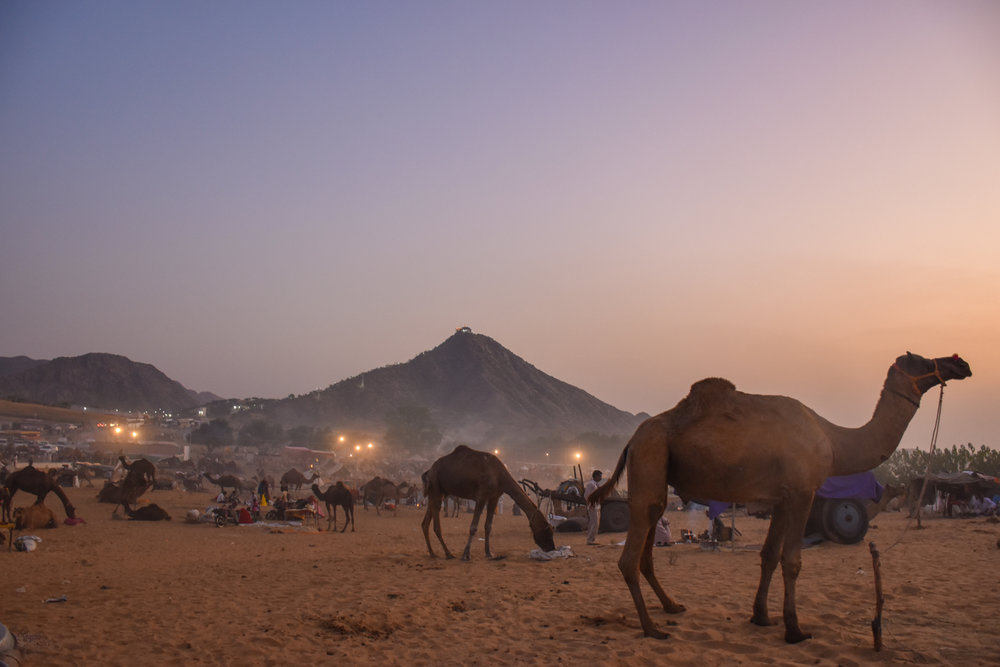 Pushkar Camel Fair. Credit: Angie Davis