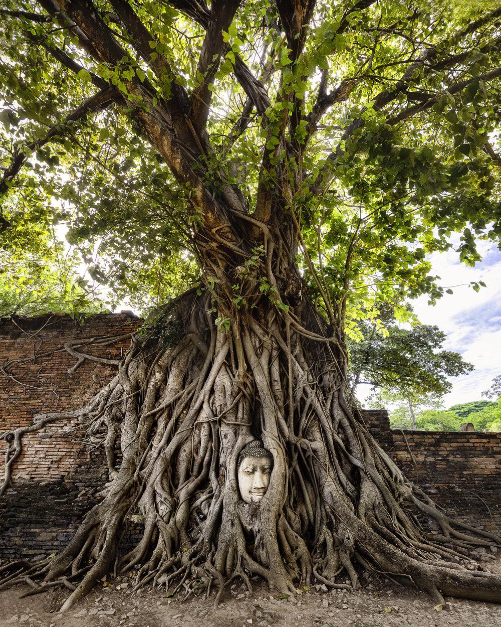 Wat Mahathat in Ayutthaya - Buddha Head in Tree.jpg