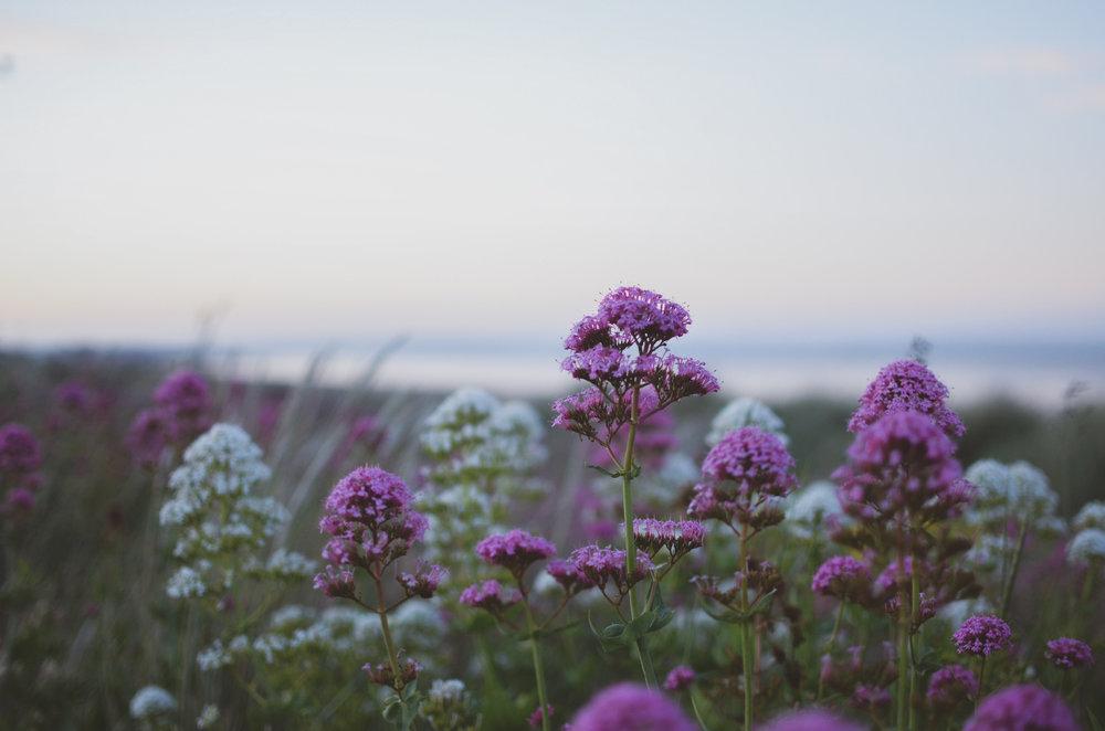 Kwiatki 1 (1 of 1).jpg