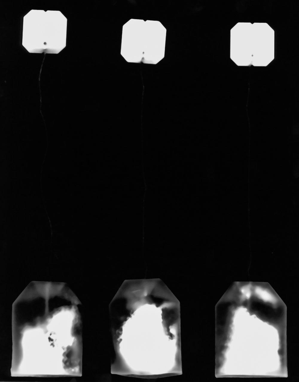 Assignment: Photograms  Gelatin Silver Print  Fall 2017