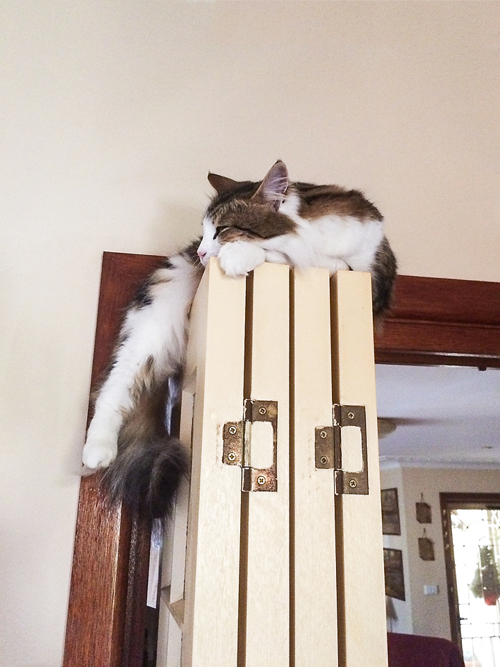 Female cat lounging on top of door