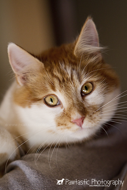 orange and white ginger cat held in arms