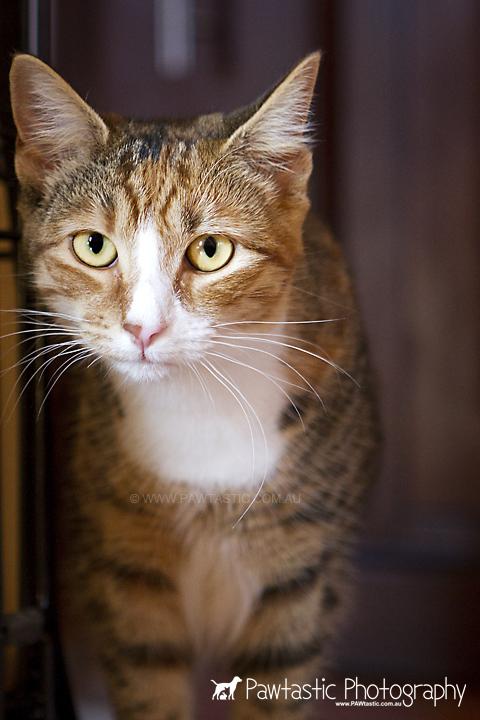 tabby cat standing near window