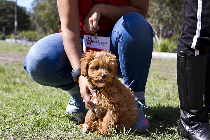 Puppy at Sydney Park, Enmore