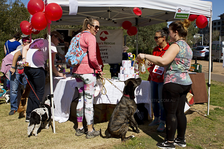 Muddy_Paws_Walk_003