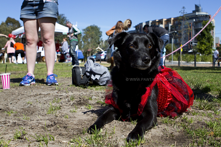 Muddy_Paws_Walk_010