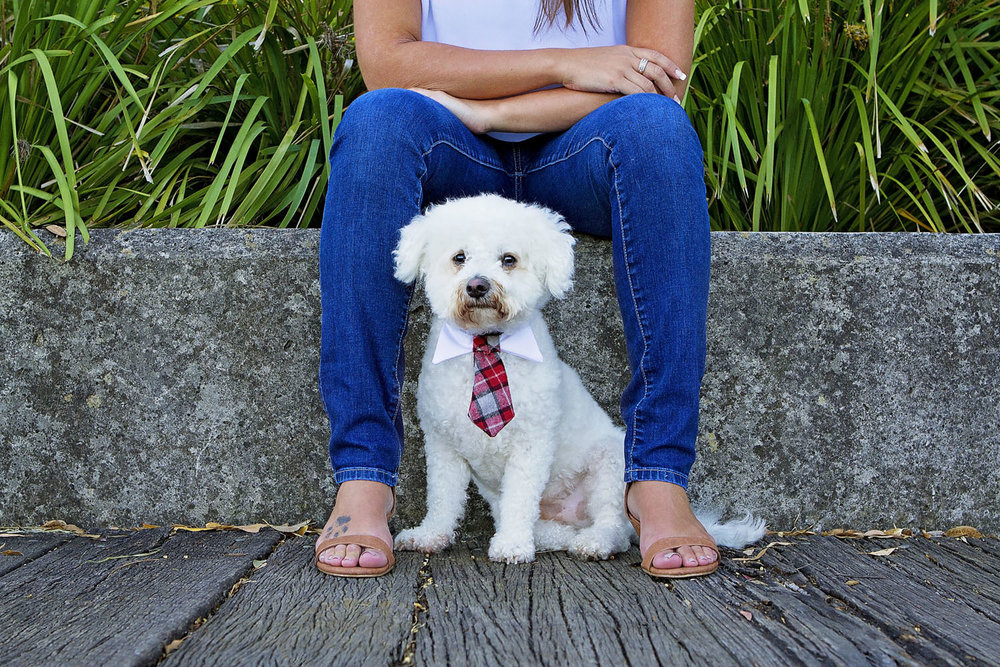 Portfolio | Sydney Pet Photographer_001.jpg