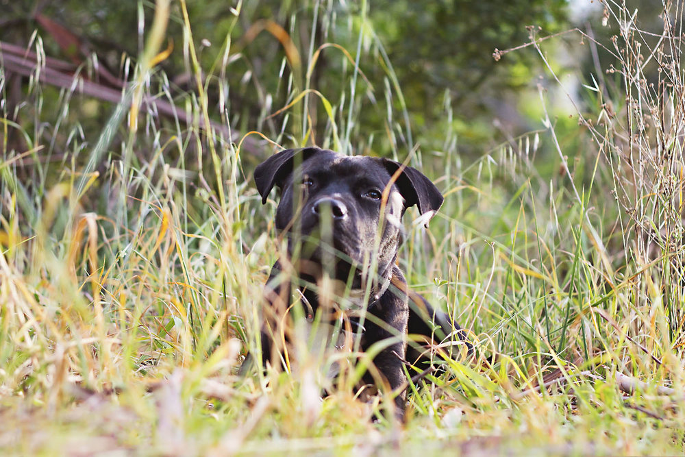 Portfolio | Sydney Pet Photographer_008.jpg