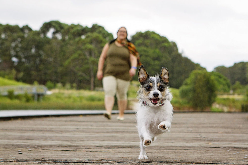 Portfolio | Sydney Pet Photographer_010.jpg