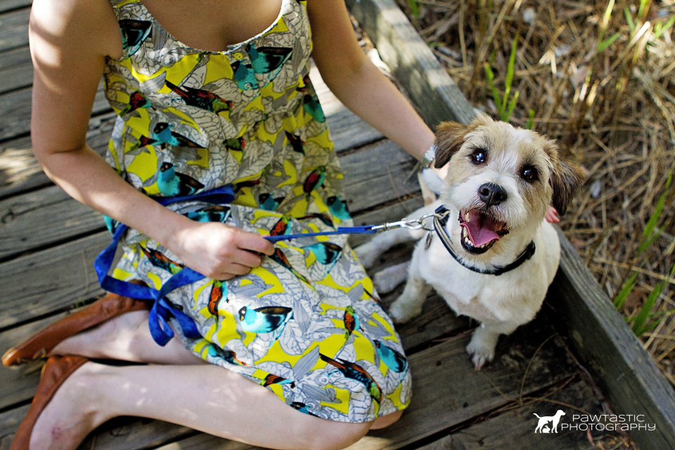 Pet portraits with a jack russell terrier dog | Sydney Pet Photography