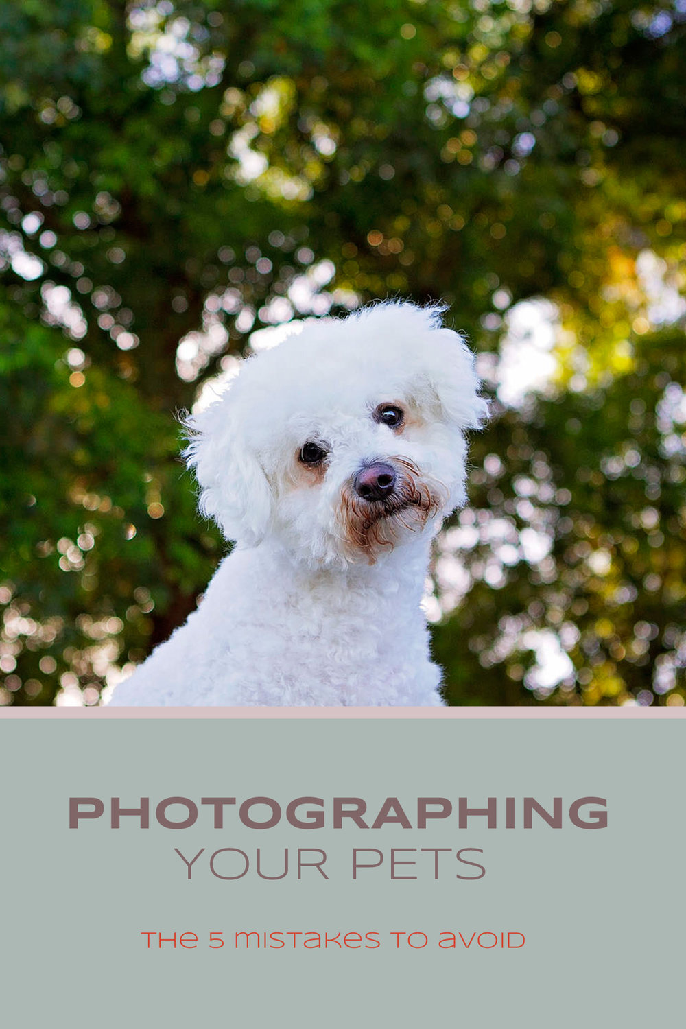 Photographing Your Pets - The five (5) most common mistakes to avoid | Sydney Pet Photographer