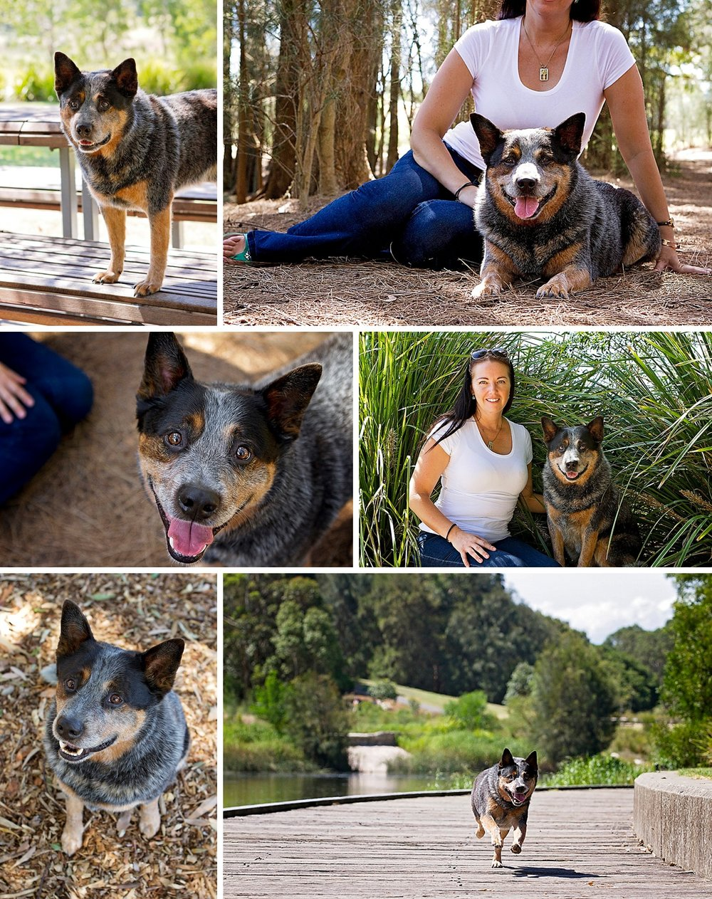 Sydney pet photographer takes photos of blue cattle dog Zac and his mum, Belinda, for Pawtastic Photography's annual Dog Days of Summer.