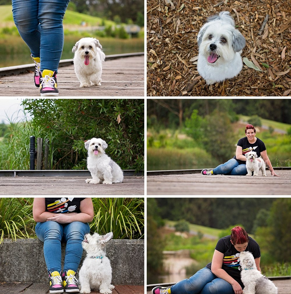 Meet the cutie Baxter, a Shih Tzu dog, who was part of the Dog Days of Summer with Sydney pet photographer, Pawtastic Photography