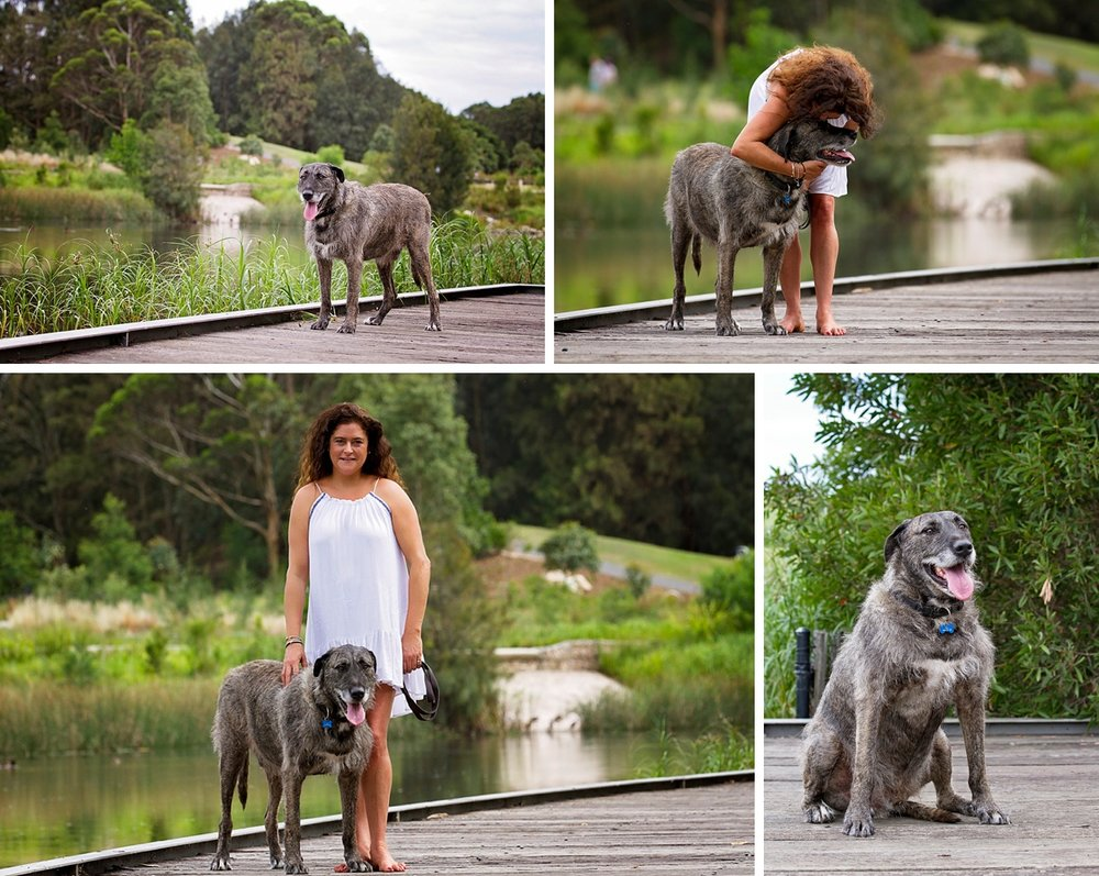 Wolfhound x Great Dane, Ed, takes part in his Dog Days of Summer photo shoot with Pawtastic Photography, a Sydney pet photographer.