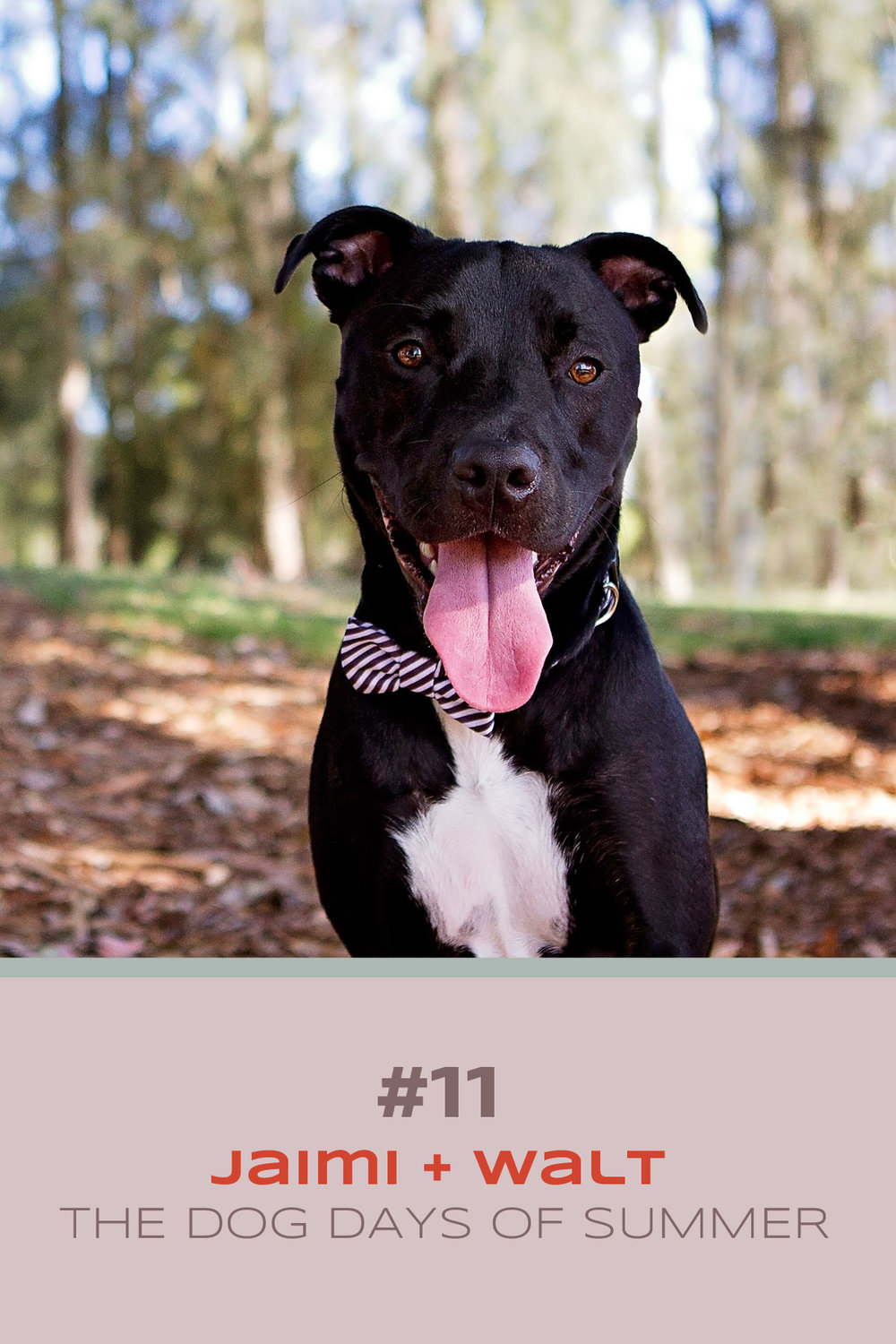 Black staffy dog takes part in Sydney pet photographer's Dog Days of Summer with his owner - where we celebrate women's best friend!
