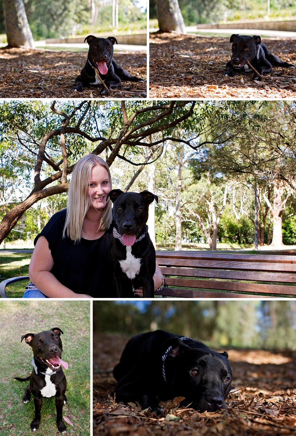 Cute black Staffy dog, Walt, has fun in Sydney Park during his Dog Days of Summer photo session with Sydney pet photographer, Pawtastic Photography