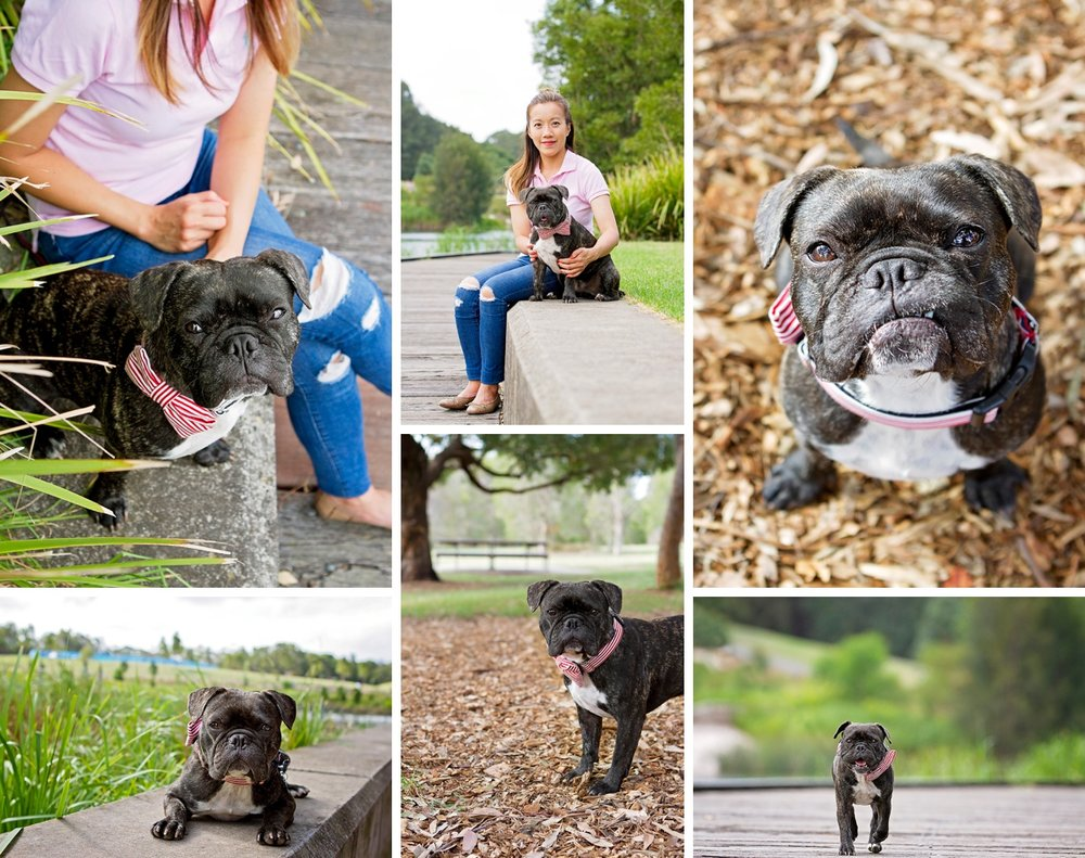 Dante, the French Bulldog x Pug, struts his stuff during his Dog Days of Summer photo shoot with Pawtastic Photography, a Sydney based pet photographer.