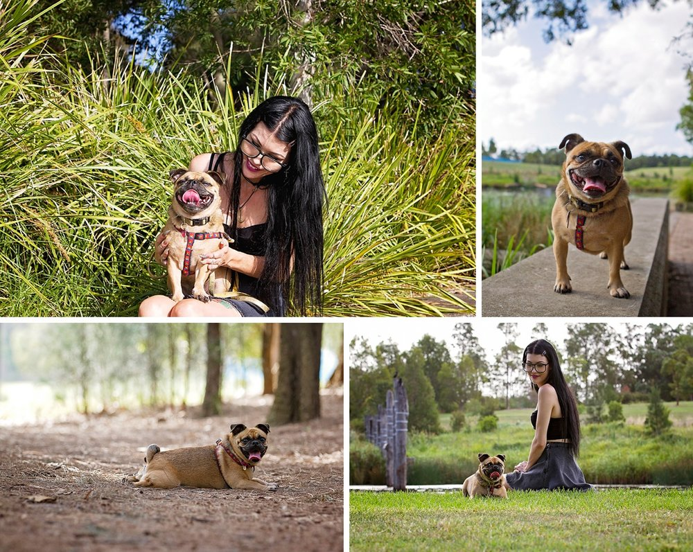 Pug dog Pumpkin poses up a storm during her Dog Days of Summer photo session with Sydney based pet photographer, Pawtastic Photography.