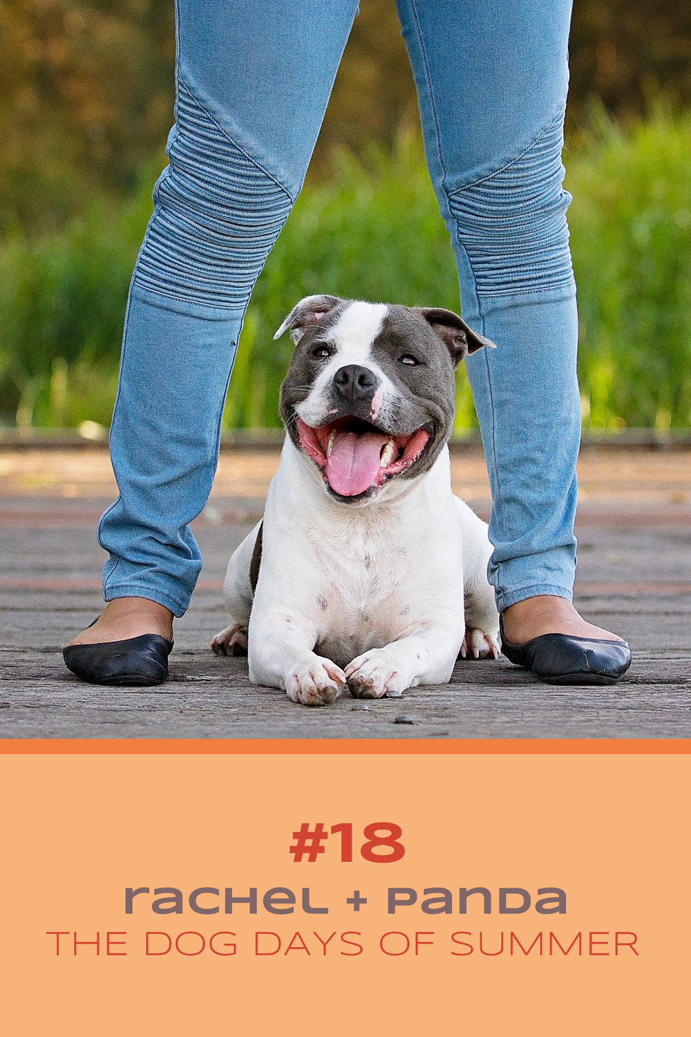 Staffy dog poses between the legs of her owner during her Dog Days of Summer session with Sydney based pet photographer, Pawtastic Photography