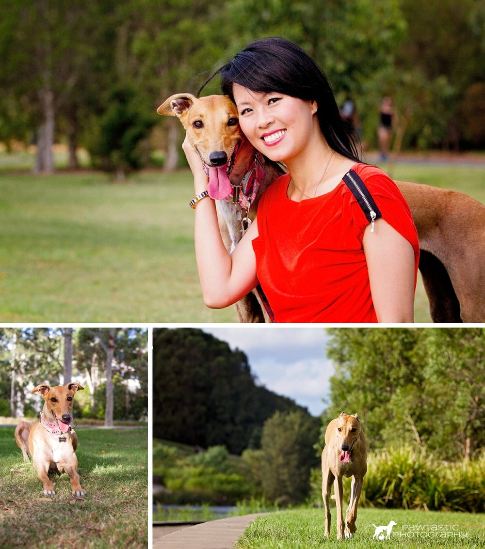 Rescue greyhound, Petal cuddles up to her owner and poses in Sydney Park against a green backdrop of grass and trees for some photos during her Dog Days of Summer professional photoshoot with Pawtastic Photography, a Sydney based Pet Photographer